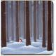 Coasters - Eva Melhuish Tomte in Trees